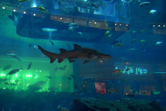 Maracujabluete-Reiseblog-Reisebericht-Dubai-Citytrip-Stopover-Dubaimall-Aquarium-1
