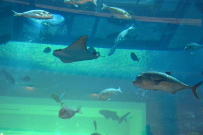 Maracujabluete-Reiseblog-Reisebericht-Dubai-Citytrip-Stopover-Dubaimall-aquarium-2