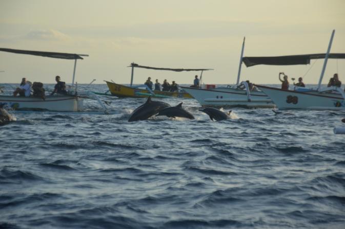 Maracujabluete-Reiseblog-Bali-Reisebericht-Lovina-Sonnenaufgang-Delfine-3