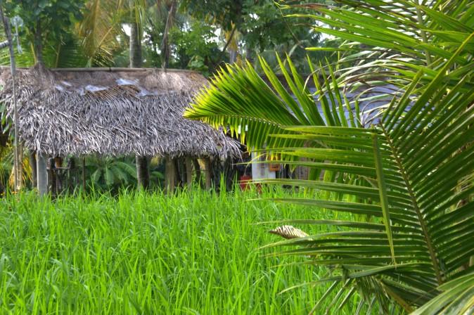 Maracujabluete-Reiseblog-Reisebericht-Bali-Ubud-Reisterrassen-Reisfelder-1