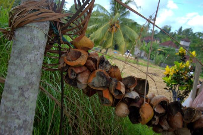 Maracujabluete-Reiseblog-Reisebericht-Bali-Ubud-Reisterrassen-Reisfelder-11