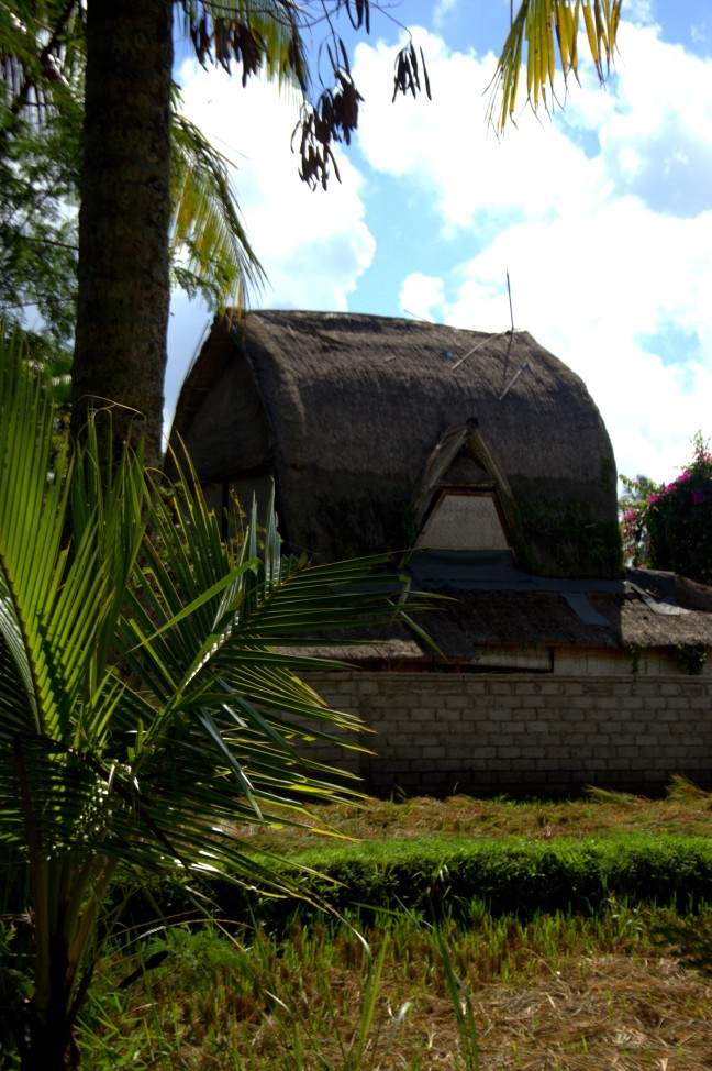 Maracujabluete-Reiseblog-Reisebericht-Bali-Ubud-Reisterrassen-Reisfelder-5