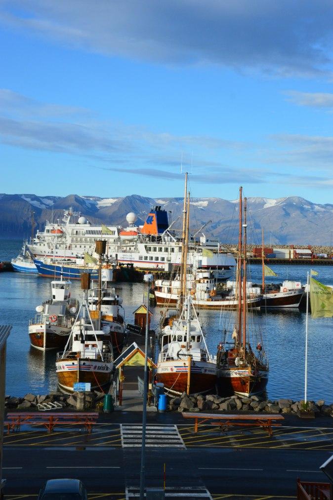 maracujabluete-travelblog-reiseblog-reisebericht-island-husavik-1
