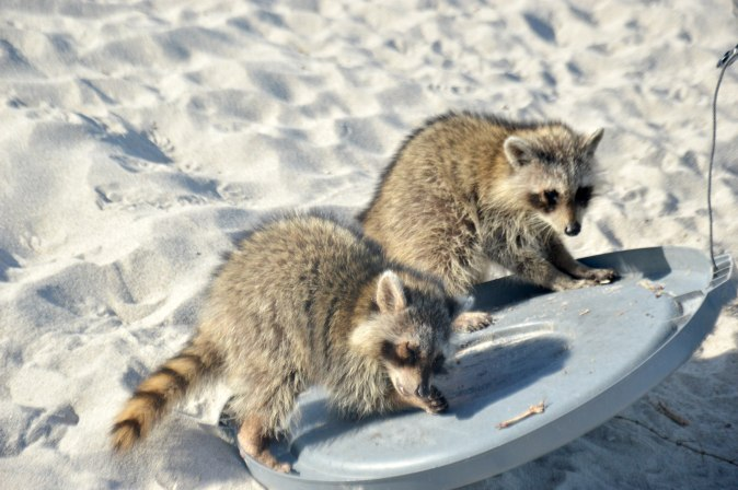 Maracujabluete-Reiseblog-Travelblogger-Reisetipps-Miami-staedtetrip-south-beach-27