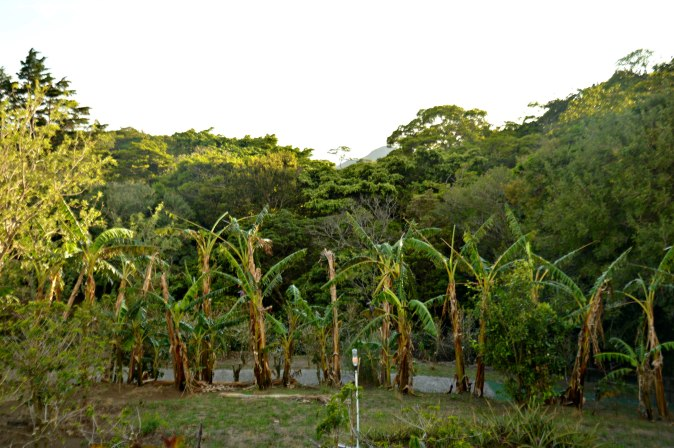 Maracujabluete-Reiseblog-Travelblogger-Reisetipps-Costa-Rica-Coffeetour-don-juan-6