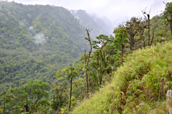 Maracujabluete-Reiseblog-Travelblogger-Reisetipps-Costa-Rica-Roadtrip-46