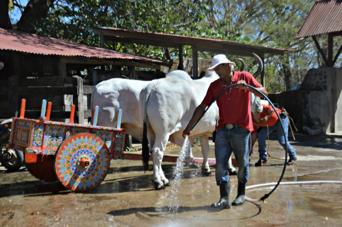 Maracujabluete-Reiseblog-Travelblogger-Reisetipps-Costa-Rica-Roadtrip-Hacienda-Guachipelin-1