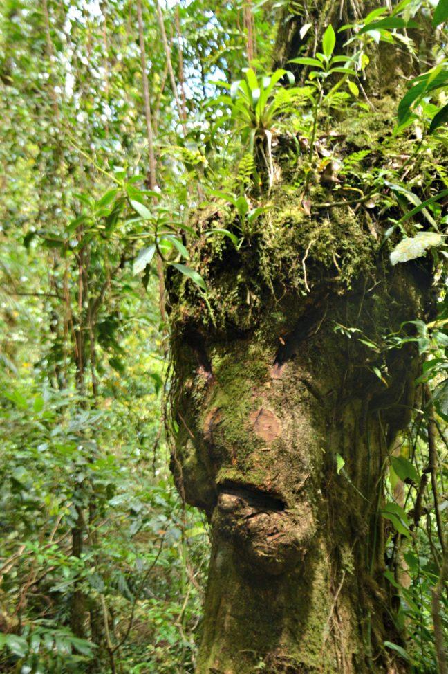 Maracujabluete-Reiseblog-Travelblogger-Reisetipps-Costa-Rica-Roadtrip-Hanging-Bridges-Monteverde-Cloudforest-2