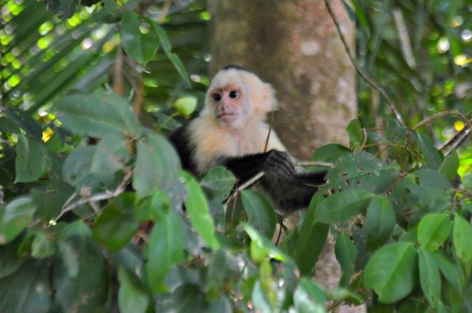 Maracujabluete-Reiseblog-Travelblogger-Reisetipps-Costa-Rica-Roadtrip-Manuel-Antonio-NP-1