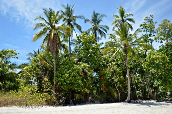 Maracujabluete-Reiseblog-Travelblogger-Reisetipps-Costa-Rica-Roadtrip-Manuel-Antonio-NP-3