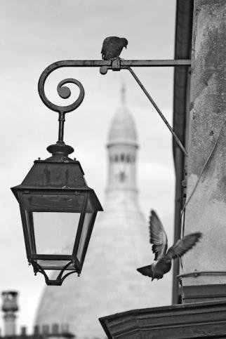 Poster Montmartre Tauben mit Sacre Coeur - © Editors Choice