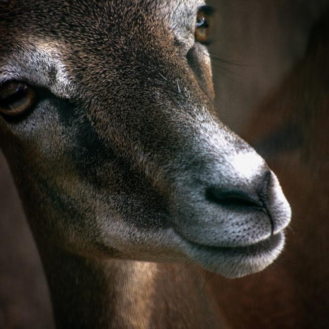 Maracujabluete-Reiseblog-Tierportrait-Objektive-Panasonic