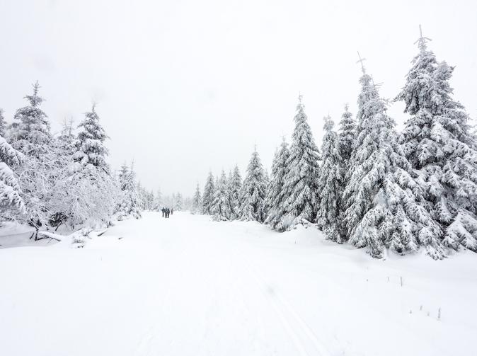 Reisetipps Harz Nationalpark