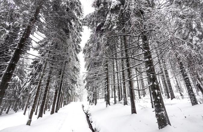 maracujabluete-reisen-reiseblog-frankfurt-reisetipps-harz-nationalpark-brocken-winter-17.jpeg
