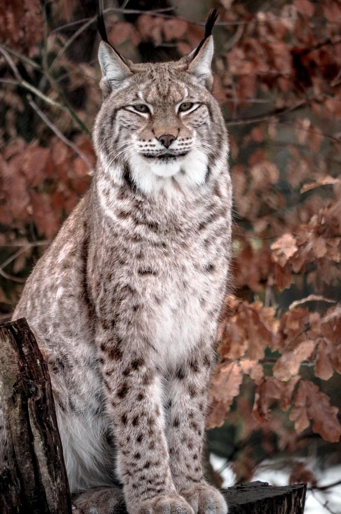 maracujabluete-reisen-reiseblog-frankfurt-reisetipps-harz-nationalpark-brocken-winter-wildpark-thale-2