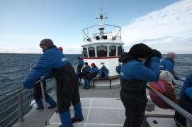 Olafsvik Whale Watching